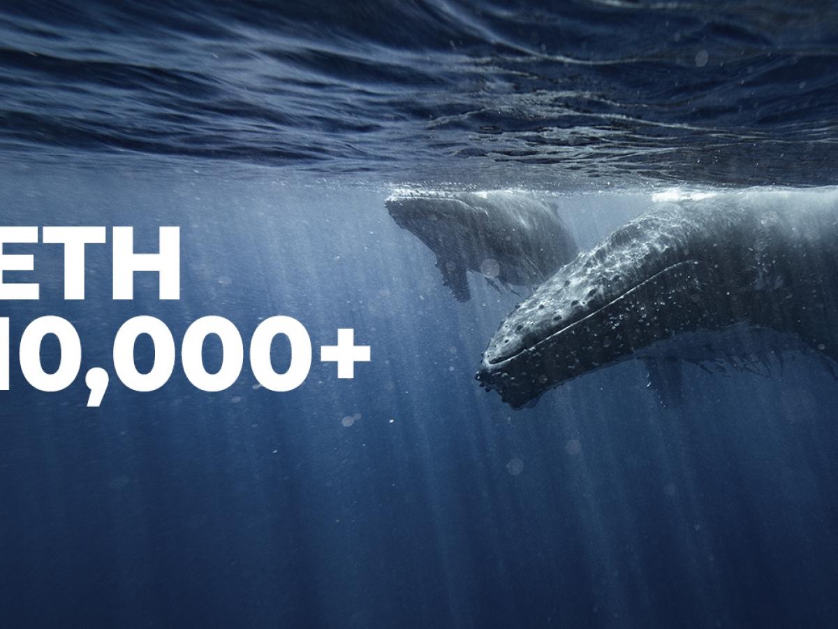 10 000den fazla eth tutan balinalarin sayisi artti 60212ec64d719