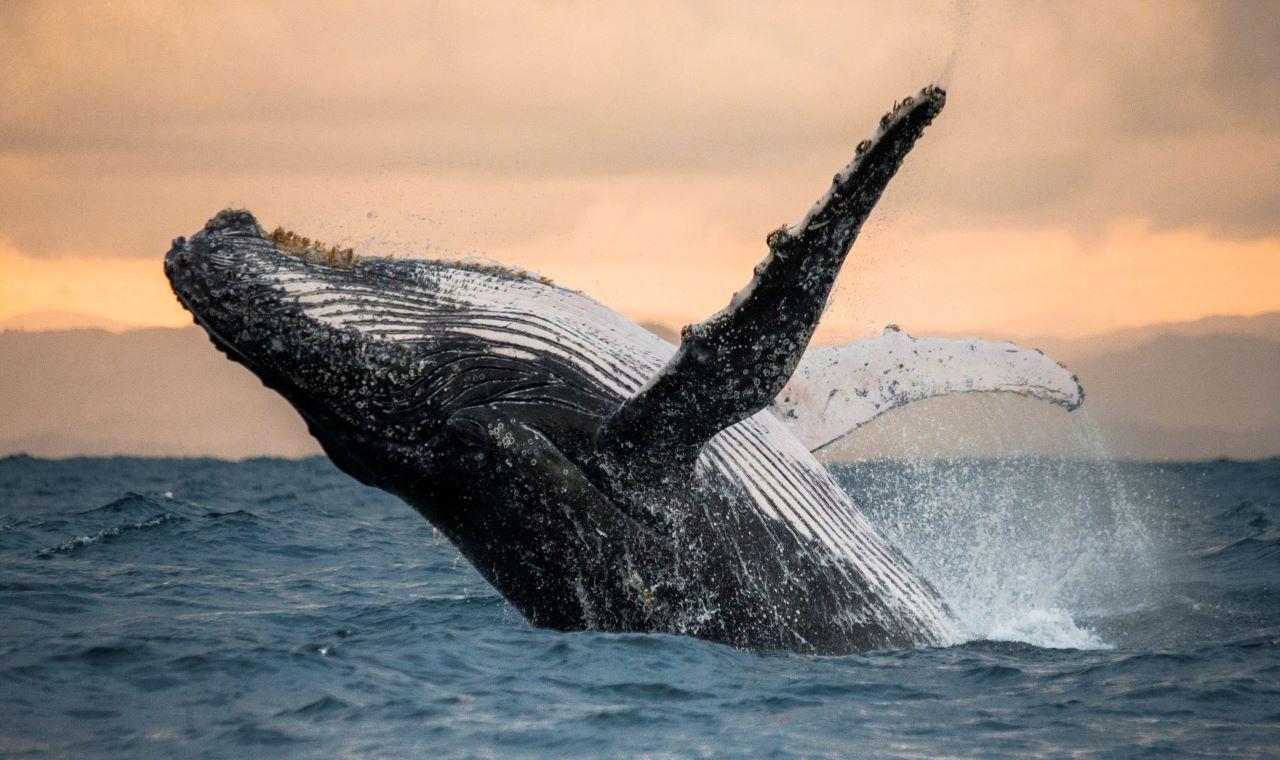 devasa balina 1 1 milyar dolar degerindeki bitcoinleri hareket ettirdi 6021168648437