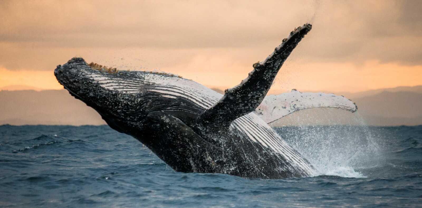 santiment kripto balinalar sessizce bu altcoinleri biriktiriyor 60212ee8dca8d