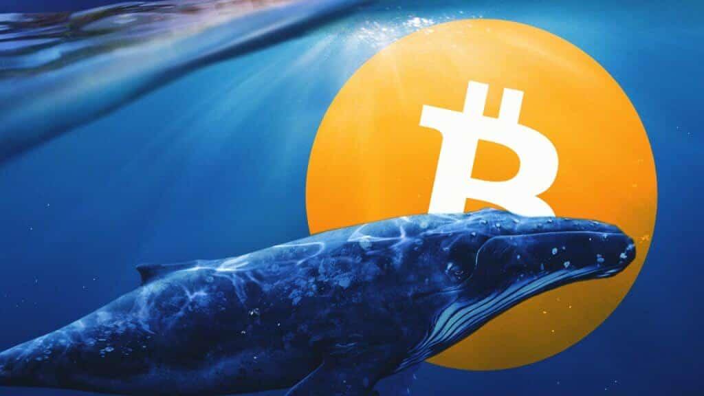 bitcoin, BTC, kripto, bitcoin balinası
