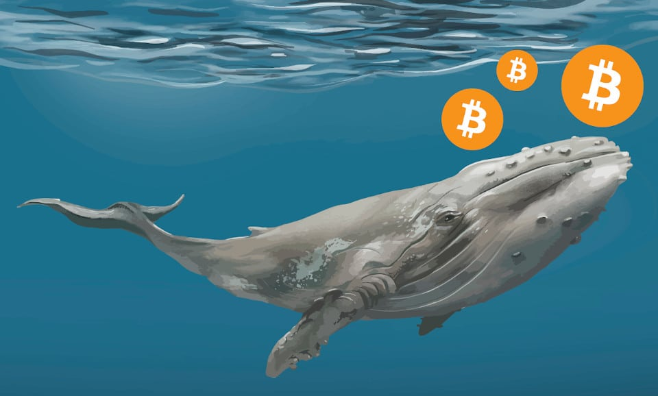 CryptoQuant, Bitcoin fiyatı, BTC, balina